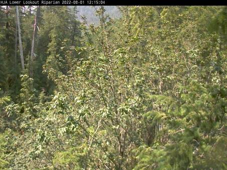 Phenology webcam, © HJ Andrews, LTER (AND), OSU