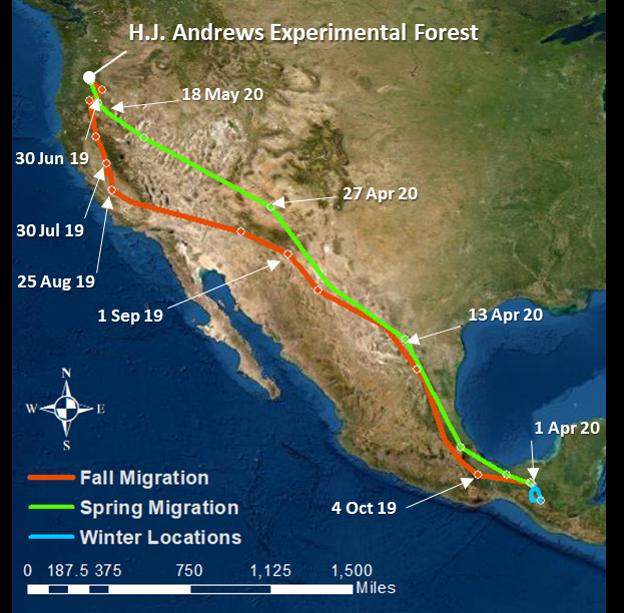 migration map of a hermit warbler
