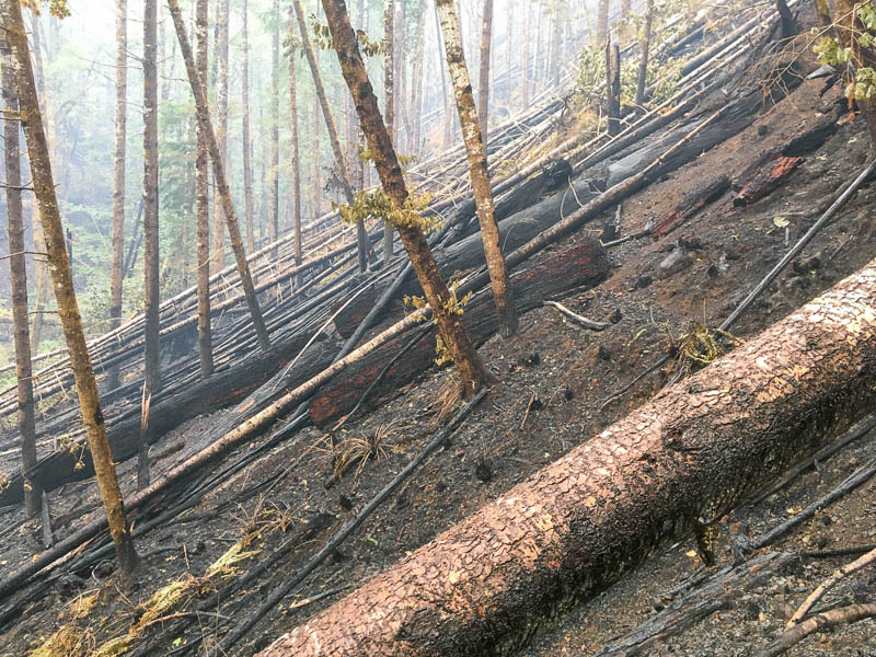 fire impacts in Watershed 1