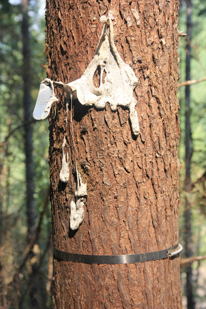 melted tree tag