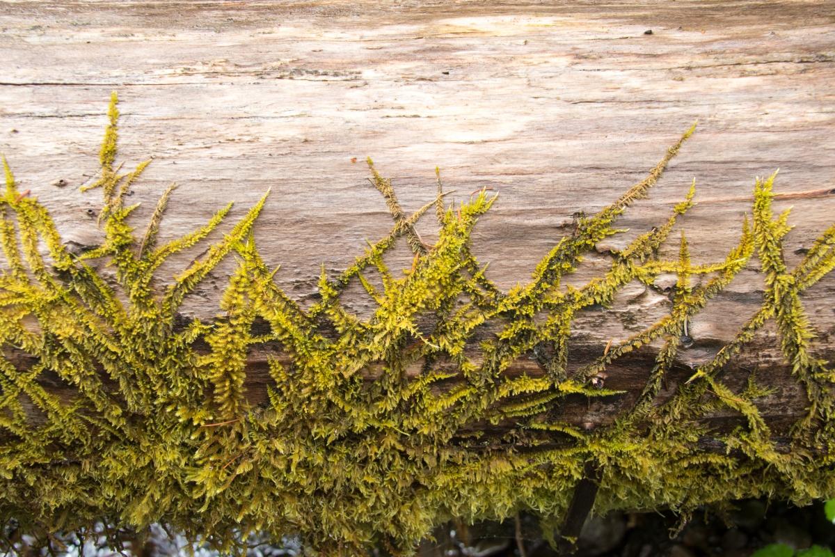 log and moss