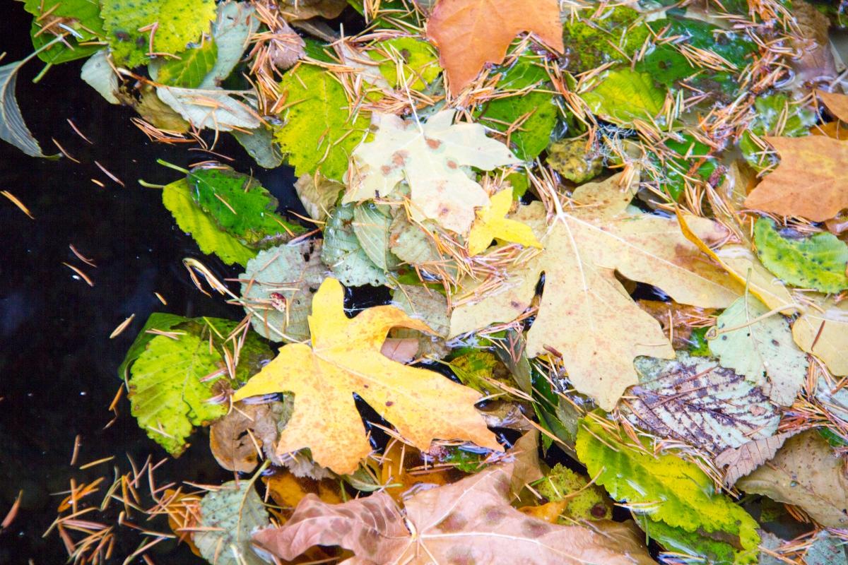 leaf litter in a stream
