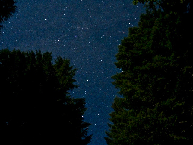 Nighttime photo of the Andrews Forest by Jill Sisson