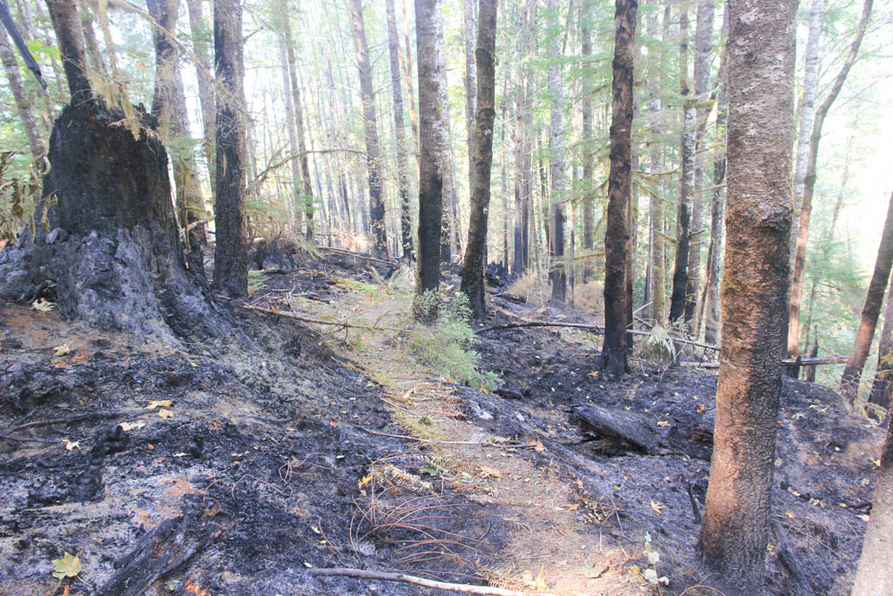 burned area of Watershed 1